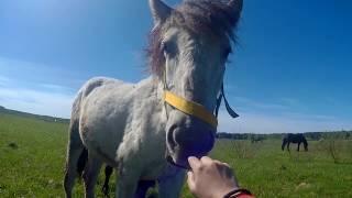 Обзор новостей и новая лошадь: Маркиза