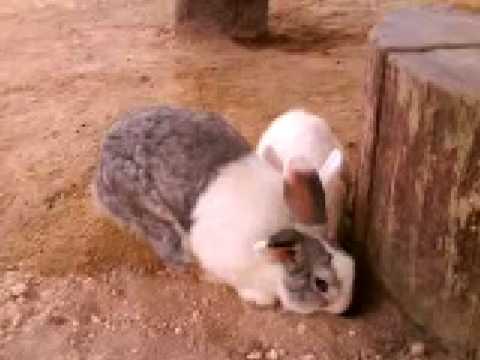 Rabbit Farm @ Bukit Tinggi
