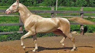 Die 5 Ungewöhnlichsten Pferderassen!