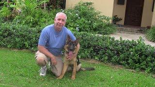Miami Dog Whisperer   Awarded BEST Dog Training Company 5 years in a row!
