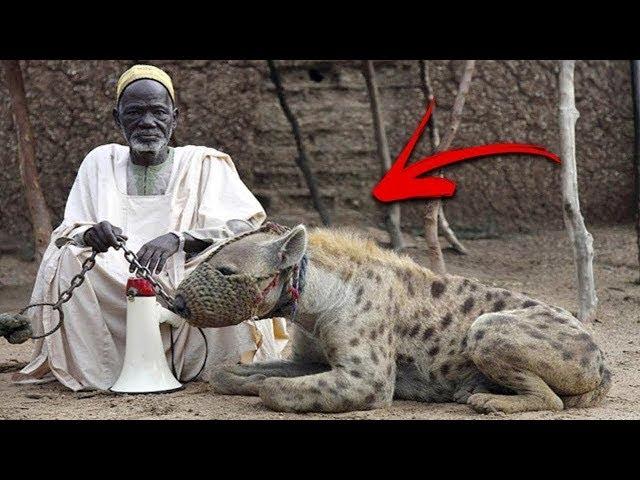 10 حيوانات مخيفة يربيها البشر كحيوانات أليفة !!