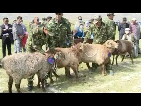 Annual goat race festival held in NW China's Xinjiang Province