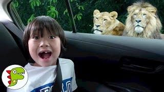 おでかけ 姫路セントラルパーク!ドライブスルーサファリで動物を見てみよう! トイキッズ