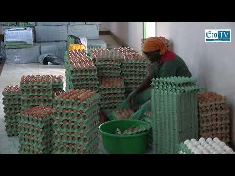 MOABLAOU, le poulailler qui pèse plus de 4 milliards de FCFA !