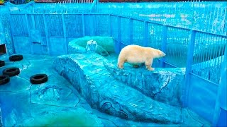 Идем в Зоопарк смотреть на большого слона, тигра, черепах, льва, медведей и других животных
