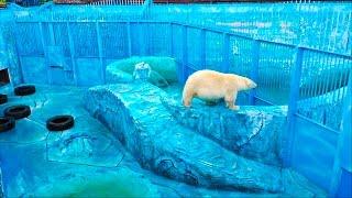 видео Зоопарк