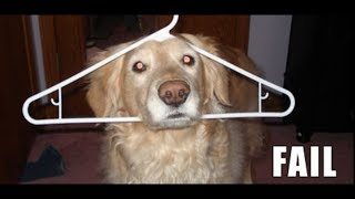 Best Funny Dogs Fail Caught on Camera. Try not to laugh