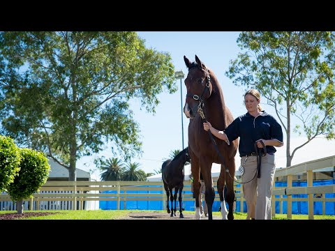 2017 Adelaide Yearling Sale Day 2 - Part 2