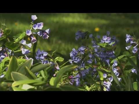 Top Shade Garden Plants