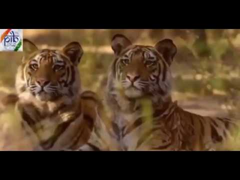 Video: On International Tiger Day, here are some candid shots of tigers from across the country