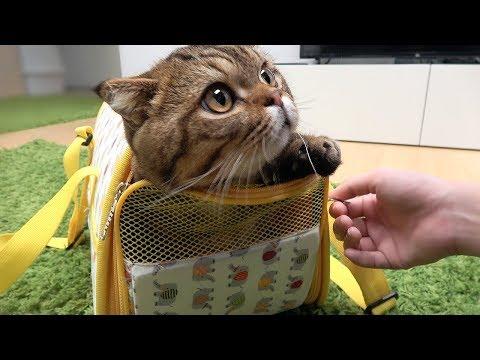 병원에 가서도 애교 부리는 고양이