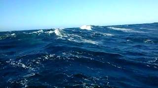 Ballenas chocan con lancha de Lebu//  Pod of Curious Whales Approach our Boat