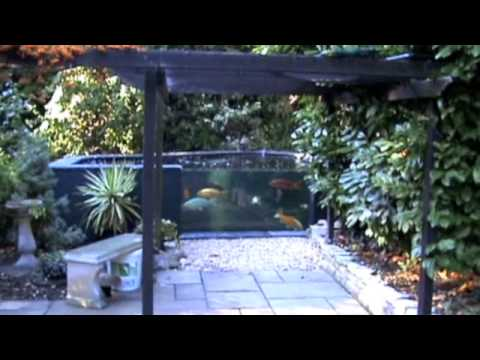 Koi pond 5000 gallons with 2m x 1m window by mick gibbs for Koi pond window