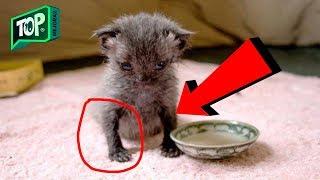 Ella Pensó que Había salvado a un Gatito gris - Se quedó sin Palabras cuando cambio de color