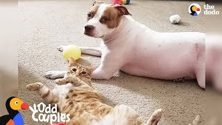 Dog and Cat Secretly Hang Out When No One is Looking - ELMO & EMMA | The Dodo Odd Couples