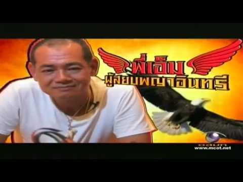 Bird Control Thailand เหยี่ยวไล่นกพิราบ