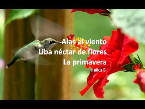 Haikus poemas de Araceli García