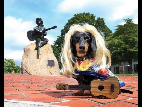 Crusoe the Celebrity Dachshund Visits The Smoky Mountains ( Full Version )