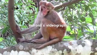Documentary On Monkey.