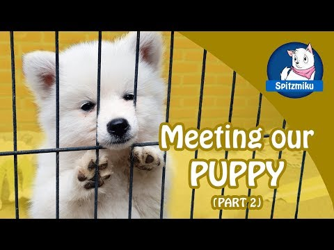 MEETING OUR FUTURE PUPPY - Part 2