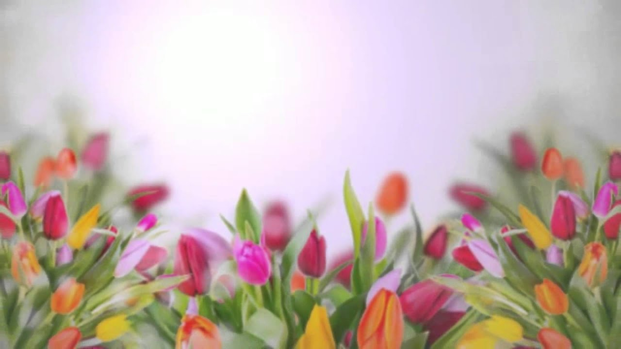 Тепличные хозяйства по выращиванию цвет 129