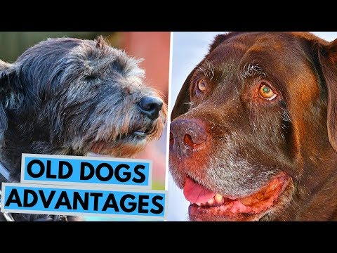10 Reasons Why You Should Adopt a Senior Dog