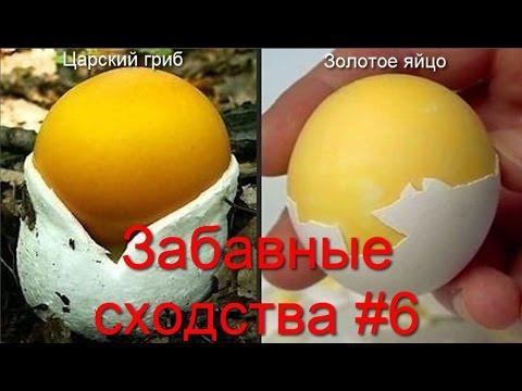 Титьки орг голые знаменитости, русские и иностранные