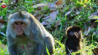 Amazing to beautiful team of Alpha trains baby/ Animals Natural Lovely Youlike Monkey 1099