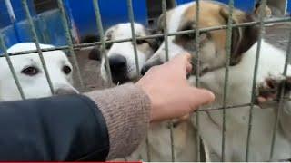 Barınakta Sahibini Bekleyen Köpekler Ve Ekmeği Çok Seven Özgür Kuşlar