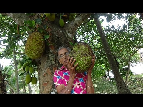 Amazing Jackfruit cutting and cooking by Grandma in my Village