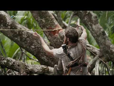Comment fabriquer une corde à partir de racines.