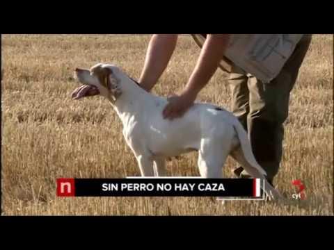 Titulares de las Noticias Castilla y León 14.30h (14/08/2017)