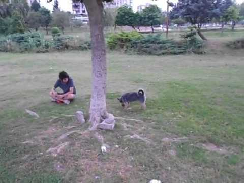 dog travel turkey in adana 3