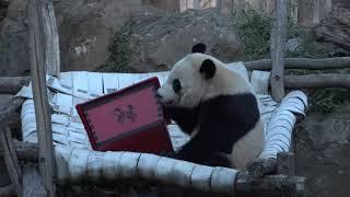 Chinese New Year Panda Greeting 2018