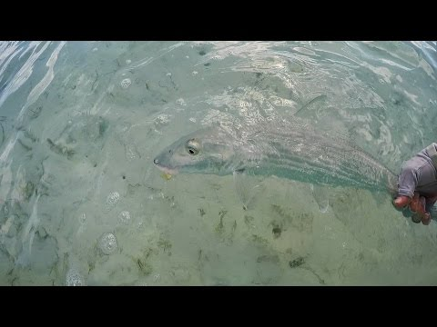 DIY and guided fly fishing for bonefish, Mangrove Cay, South Andros