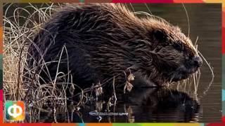 5 интересных фактов о животных