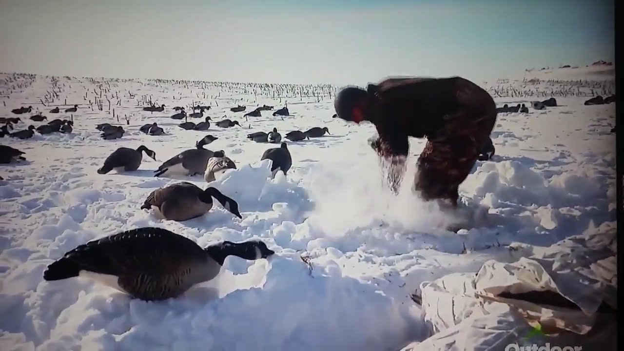 3bcebf8fb3 The Flush, Best Goose hunting,Canadian,Canada,North Dakota,snowy,cold day, goose calling