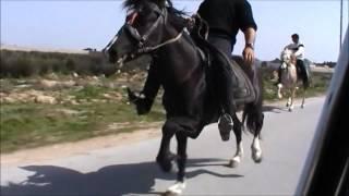 Yorğa atlar