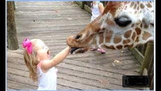 KOTY! Śmieszne dzieci kontra zwierzęta w zoo - NIE POTRZEBUJESZ SIĘ