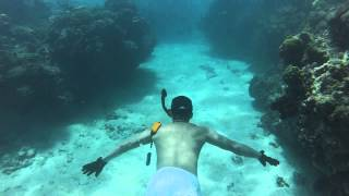Snorkeling in Jamaica/ Montego Bay