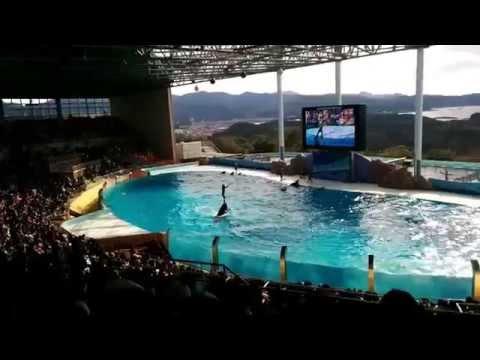アドベンチャーワールド イルカショー Dolphin show in Wakayama Prefecture of Adventure World