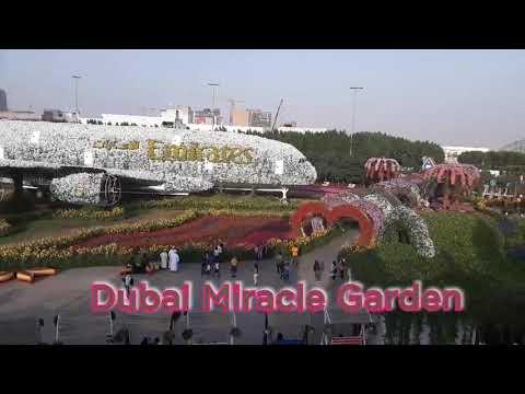 Dubai Miracle Garden /Beautiful place in Dubai