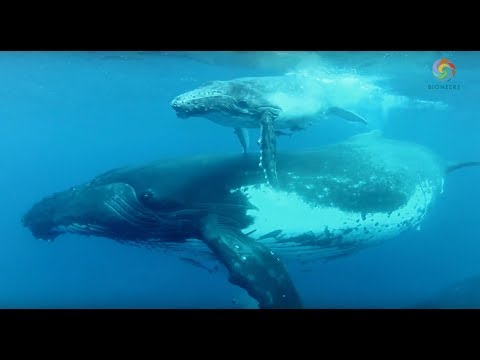 Making Contact: The Intelligence of Whales - James Nestor