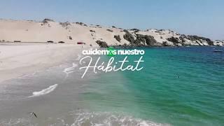 Limpieza de Playas Antofagasta //AFP hábitat