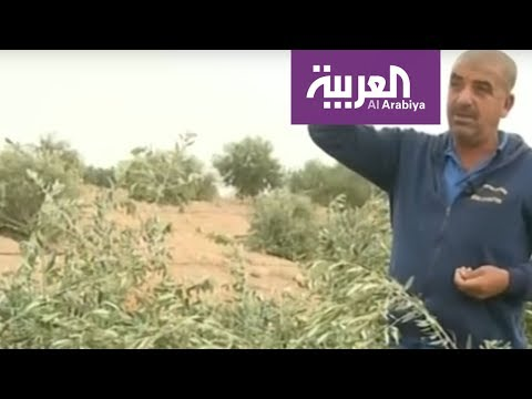 إسرائيل تجرف أراض زراعية للفلسطينيين  - نشر قبل 10 ساعة