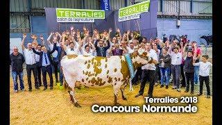 Terralies 2018 : La rumba de Havane, au concours normande
