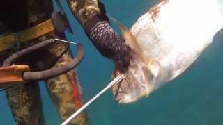 Cupra / Orata 1.7kg - Zıpkın Avı / Spearfishing