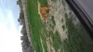 FUCKED UP DOG PUSSY!!!