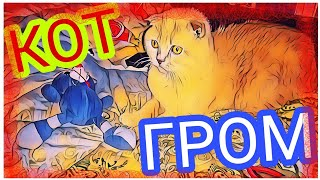 #1 Кот Гром    Вязка    Шотландский вислоухий кот    Опытный кавалер приглашает дам    new 2017
