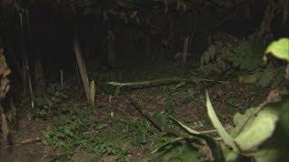 【HTBニュース】北斗市の住宅の庭にクマ 畑のウド1キロ荒らされる